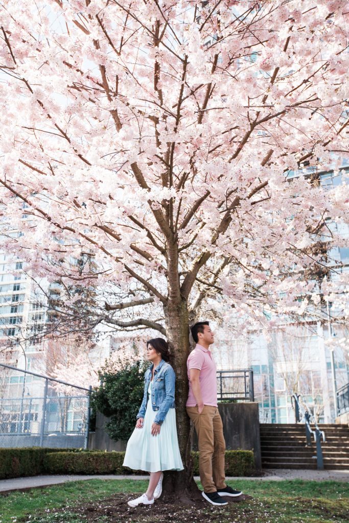 Cherry Blossom Spring engagement session in vancouver where the couple are both leaning on a cherry blossom tree